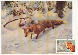 D32108 CARTE MAXIMUM CARD 1961 ROMANIA - FOX FUCHS RENARD CP ORIGINAL - Gibier