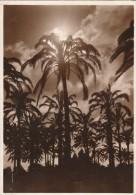 CARTOLINA VIAGGIATA 1940 TRIPOLI (TX248 - Libia