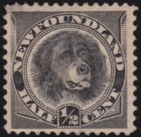 Newfoundland       .    SG     .    59        .      *    .      Ongebruikt   .    /  .   Mint-hinged - 1865-1902