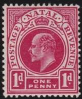 Natal       .    SG     .     147         *         .   Ongebruikt    .    /  .     Mint-hinged - Zuid-Afrika (...-1961)