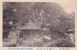 NAGASAKI / BIG CAMPHER TREE IN DAITOKUJI - Japon