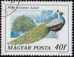 HUNGARY - Scott #2471 Peacock (*) / Used Stamp - Peacocks