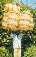 Haiti - Le Marchand De Paniers - Cartes Postales