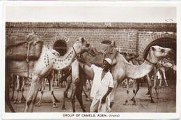 ADEN (Arabia) Grou^of Camels (101658) - Yemen