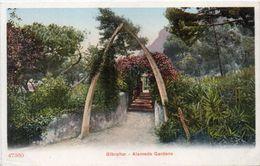 Alameda Gardens   (101669) - Gibraltar