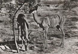 CARTOLINA VIAGGIATA CIRCA 1967 SOMALIA (CT553 - Somalia