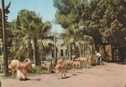 CARTOLINA VIAGGIATA 1964 LIBIA TRIPOLI (CT557 - Libya