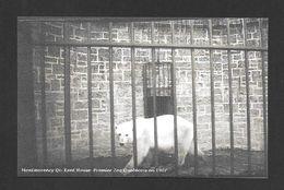 MONTMORENCY - QUÉBEC - (KENT HOUSE) - PREMIER ZOO QUÉBÉCOIS EN 1907 - LE JARDIN ZOOLOGIQUE ET L' OURS BLANC - Chutes Montmorency