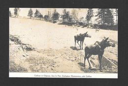 MONTMORENCY - QUÉBEC - (KENT HOUSE) - PREMIER ZOO QUÉBÉCOIS EN 1907 -  CARIBOUS ET ORIGNAUX DANS LE PARC ZOOLOGIQUE - Chutes Montmorency