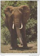 (AN278) ELEFANT. ELEPHANT. ELEFANTE ... UNUSED - Elefantes
