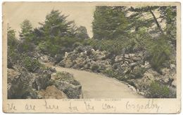 Kew Gardens The Rockery - Hildesheimer- Postmark 1905 - London Suburbs