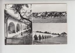 CHEVAUX HORSE PFERDE (an1004) Foto ? - Pferde