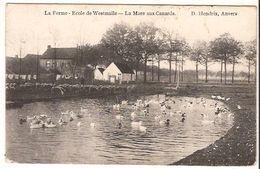 WESTMALLE  LA FERME Ecole La Mare  Aux  Canards 1909 Uitg  Hendrix 1315 D6 - Malle