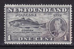 Newfoundland 1937 Mi. 221 A    1c. Codfish Fish Fische Poisson Perf. 13½ MH* - Terre-Neuve