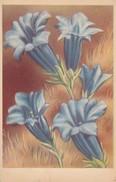 AK Enzian - Künstlerkarte (32507) - Blumen