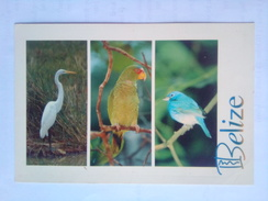 Great Egret - Belice