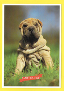 Chien - Hund - Dog - SHAR PEI - CANE - Chiens