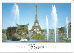 France > [75] Paris > Tour Eiffel And Chat/Cat - Tour Eiffel