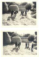 2 Petites Photos Agriculture, Estran Rousses ( Suze La Rousse ?) , Battage, Belle Scène Avec Chevaux - Métiers