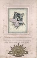 Kat Chat Cat Katze - Australian Commonwealth Military Forces - 1919 - Cats