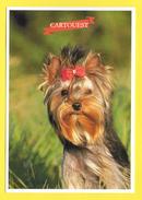 Chien - Hund - Dog - YOURSHIRE TERRIER - CANE - - Chiens