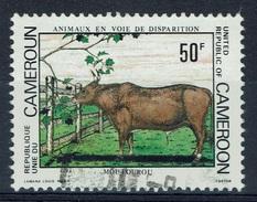 Cameroon, Cattle, Moutourou, 1981, VFU - Cameroon (1960-...)