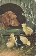 Hond Chien Dog Hund - Otto Scheuerer - T.S.N. Serie 862 - 1910 - Perros