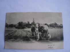 Landbouw - County Life // Ploegen (Zou Belgie Kunnen Zijn - Uit Oude Belgie Collectie) Used 1904 - Agriculture