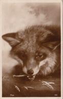 FOX - ART CARD - ORIGINAL VINTAGE POSTCARD - ANIMALS - Animaux & Faune