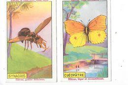 La BLEDINE  , Blécao - CLEOPATRE Lépidoptère, SYNAGRIS Insecte - 2 Chromos -   -  L 1 - Fichas Didácticas