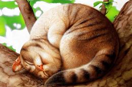 №7.5 Makoto Muramatsu Cat Modern Rare New Postcard New Animals Sleeping Cat On A Tree - Cats