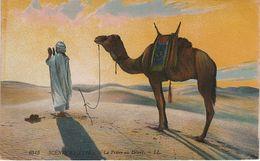 AK Prière Au Désert Sahara Scènes Types Berber Tuareg Touareg Berbère Bédouin Niger Afrique Vintage Lehnert Landrock ? - Niger