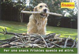 354 Citrus Cane Chien Dog Carte Postales CPM Cartoline Chiens Perro Cao Hind - Hunde