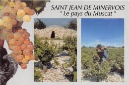 SAINT JEAN DE MINERVOIS Le Pays Du Muscat Vendanges Capitelle Et Raisins Petits Grains 10(scan Recto-verso) MA371 - France