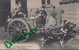 Feldpost: 2. Eskadron Husaren-Regt. Nr. 9, Antwerpen 14.1.1916, Motiv: Flämische Milchhändlerin, Attelage De Chiens - 1914-18