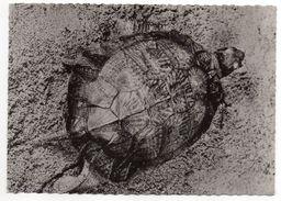 Tortue-  -Tortue Rayonnée De Madagascar -1959----cachet  PP  Montreuil Sous Bois - 93 - Schildpadden