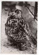 Hibou--GRAND-DUC D'Europe -- -1960----cachet  PP  Montreuil Sous Bois - 93 - Birds