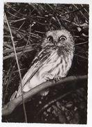 Hibou---- -1958----cachet  PP  Montreuil Sous Bois - 93 - Birds