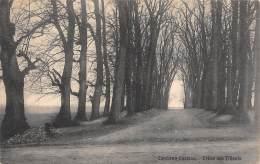 CAMBRON-CASTEAU - Drève Des Tilleuls. - Brugelette