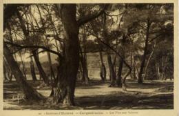 83 CARQUEIRANNE - Les Pins Aux Salettes - Carqueiranne