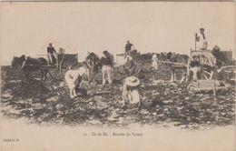 17 Ile De Ré Avant 1904 Récolte Du Varech Attelage TB Animée Sans éditeur Cliché DP N°32 - Ile De Ré