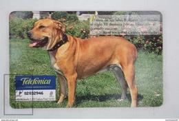 Collectible Animals Topic Phone Card - Spanish Dog Breeds - Ca De Bou/ Presa Mallorquin - Perros