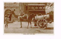 Camel Water Cart,Aden. - Yemen