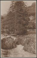 Fir Tree Island, Bettws-y-Coed, Caernarvonshire, C.1920 - Judges RP Postcard - Caernarvonshire