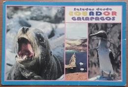 GALAPAGOS – PATRIMONIO DELL'UMANITA' – NON VIAGG. – COMPILATA NEL 2000 – (2185) - Ecuador