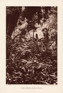 VIET NAM, FORÊT DENSE (NORD-ANNAM), Planche Densité = 200g, Format 20 X 29 Cm, (Ag. Eco. Indochine) - Géographie