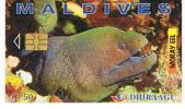 MALDIVE (MALDIVES)   - DHIRAAGU (CHIP) - 2000 MORAY EEL  (DIFFERENT CHIP)CODE 256MLD     - USED  -  RIF. 1579 - Maldives