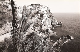 Manarola - REAL PHOTO (12,0 X 18,0 Cm) - Panorama - La Spezia - Italia - La Spezia