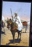 CAVALIER - Algeria