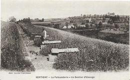 ~  JP ~ 88 ~     XERTIGNY .    ~ La Faisanderie . Un Sentier D' élévage - Xertigny